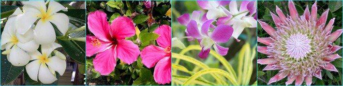 Flowers of Maui